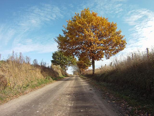 H46 - jesień :-)