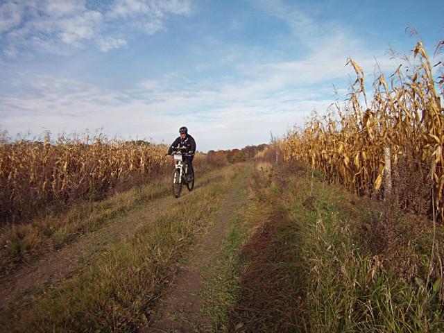 H46 - spotkanie między kukurydzą