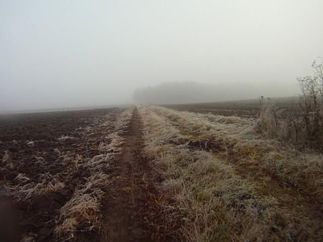 H46 - za mgłą las z punktem